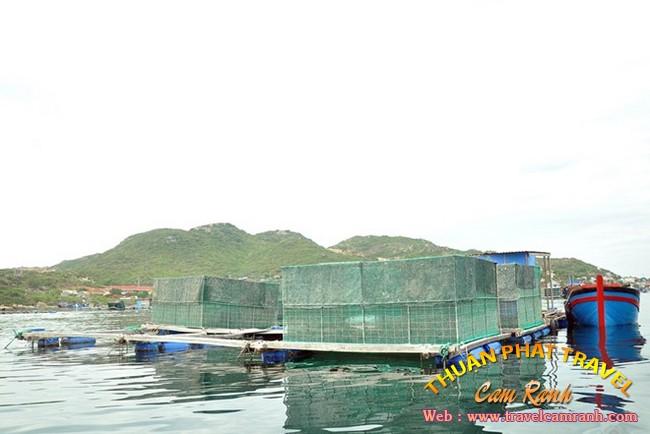 Tôm hùm Bình Ba, đặc sản ở biển đảo Bình Ba 001