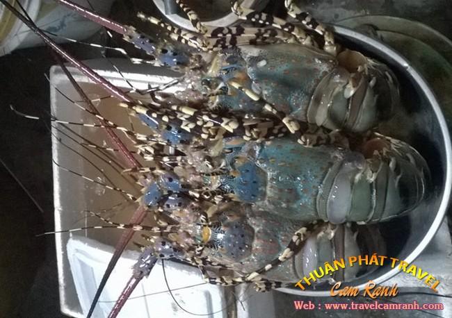 Tôm hùm Bình Ba, đặc sản ở biển đảo Bình Ba 002