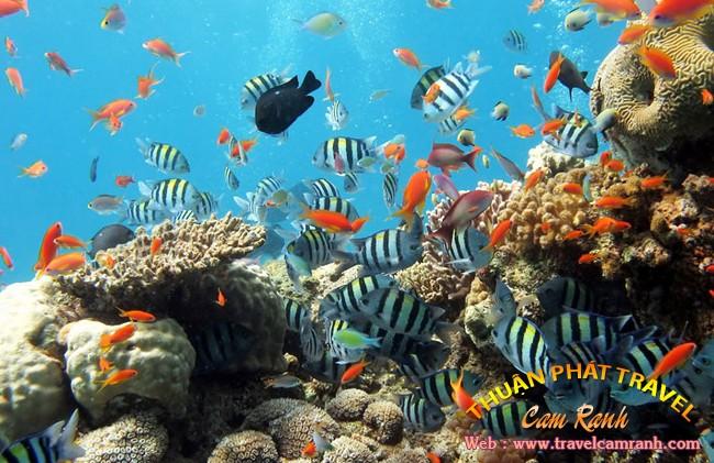 Tour Nha Trang - Đảo Bình Ba 003
